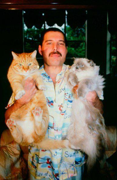 En el Día del Animal, repasamos historias como la de Freddie Mercury y el amor por sus gatos.