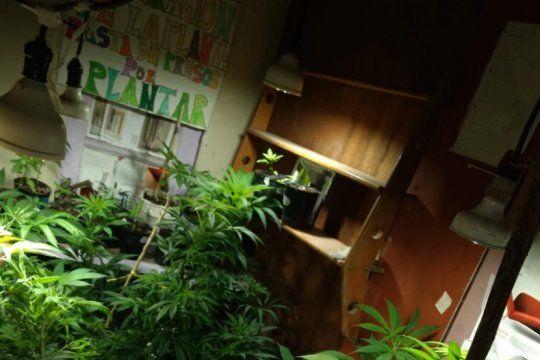 la justicia platense ordeno que restituyan plantas de cannabis a una mujer que elaboraba aceite para su nieto
