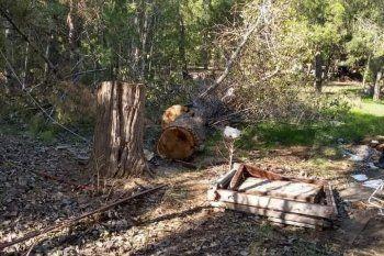 Así quedaron los árboles de la casa usurpada en Monte Hermoso