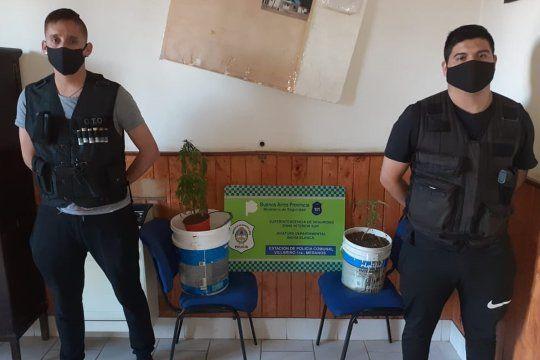 La policía secuestró dos plantas de marihuana en una sinagoga.