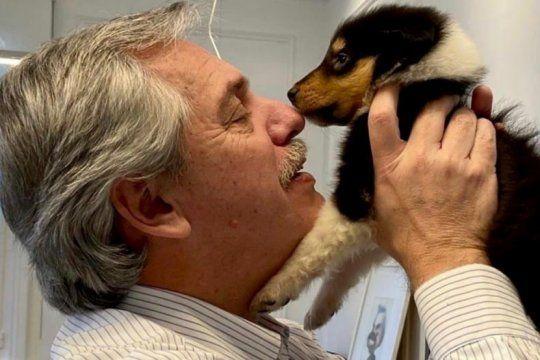"""Proteccionistas piden un """"Plan Nacional de Trato Ético a los Animales de compañía"""" (Foto: Instagram Dylan Fernández)"""