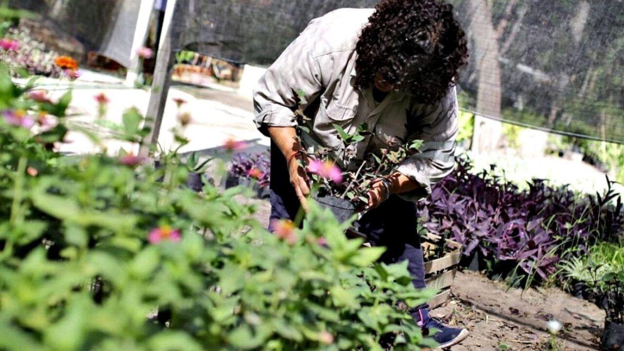 El viverismo como emprendimiento familiar en La Plata