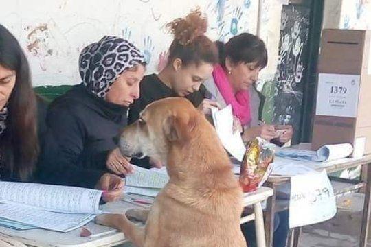el guason de lanus, el perro que queria votar y el mono ladron, las perlitas que dejo el domingo de elecciones