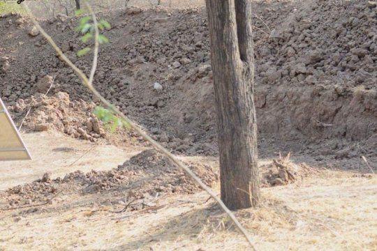 ¿donde esta el leopardo? el nuevo desafio viral que vuelve locos a los tuiteros