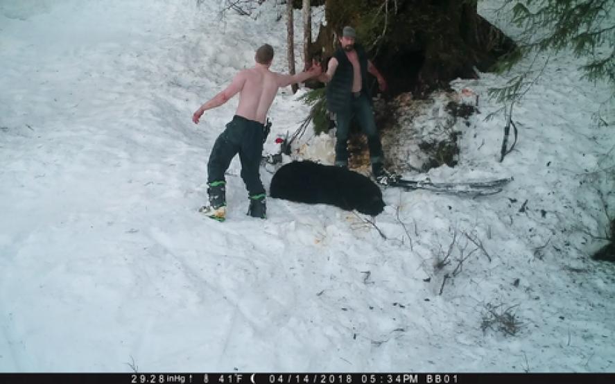 Sanguinario: Matan a una osa y a sus cachorros mientras hibernaban en su cueva