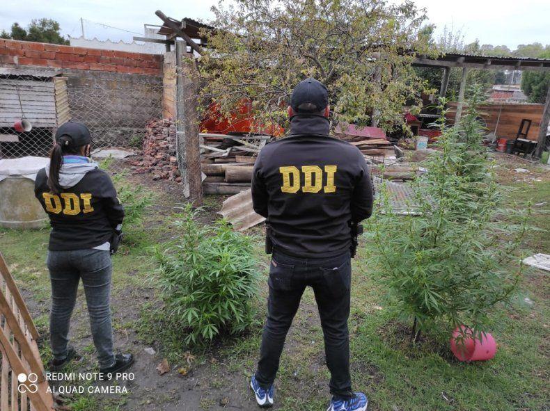 Piratas del asfalto en Mar del Plata: cayó el Tavi y buscan a Ruedita