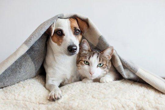 el coronavirus y los animales de compania: los gatos y los perros ¿pueden contagiarse?