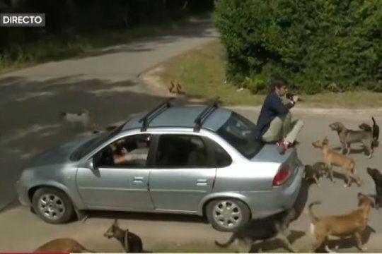 insolito: una jauria acorralo a robertito funes en pleno movil y tuvo que subirse a un auto