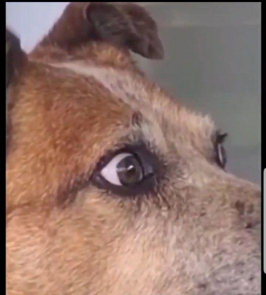 La morada del perro al ver al juguete de peluche similar a él