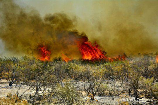 Más del 90% de los incendios forestales son producidos por intervenciones humanas