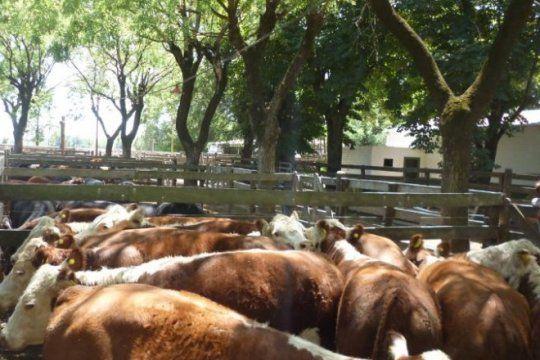 agroindustria presento el sistema sio carnes, una plataforma para brindar transparencia a los frigorificos