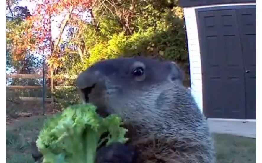"""""""Asalta huertas"""": El video que filmó el dueño de una granja delató a un simpático ladrón de frutas y verduras"""