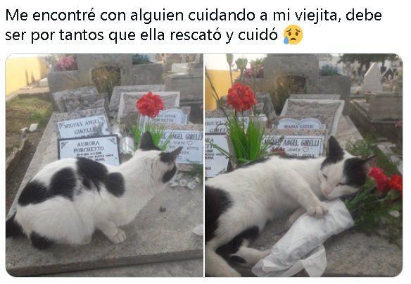 Darío se encontró con el animal cuando fue a visitar a su mamá en el cementerio de Tigre