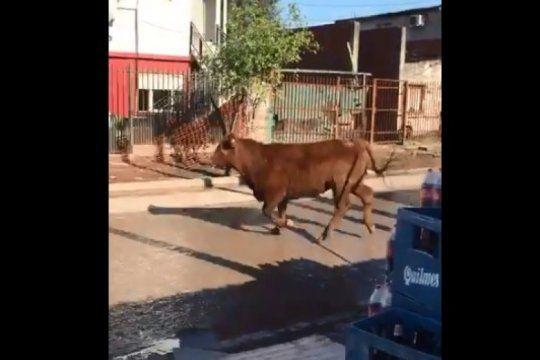 video: un toro se escapo del matadero y ataco a una mujer hasta dejarla inconsciente