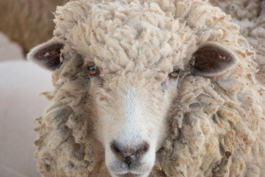 Nicolás Gatica fue acribillado de diez balazos por el presunto robo de una oveja en FLorencio Varela