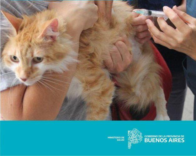Es necesaria la vacunación contra la rabia en animales domésticos todos los años