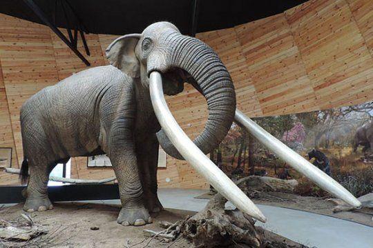 Así era el mastodonte del cual se encontró una muela que fue al Museo de San Pedro