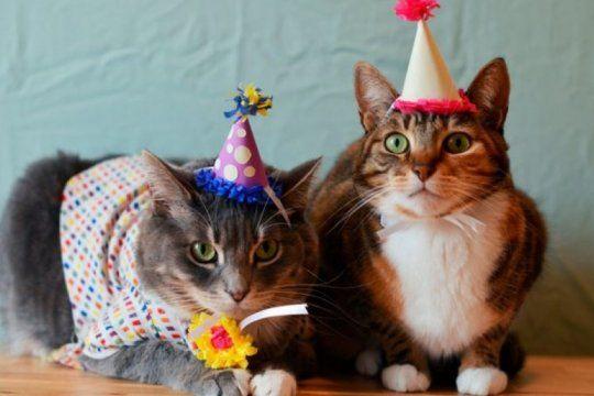 dia internacional del gato: las redes sociales explotan de fotos y mensaje para los felinos