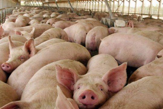 productores de cerdos bonaerenses, preocupados por el aumento de costos y la apertura de importaciones