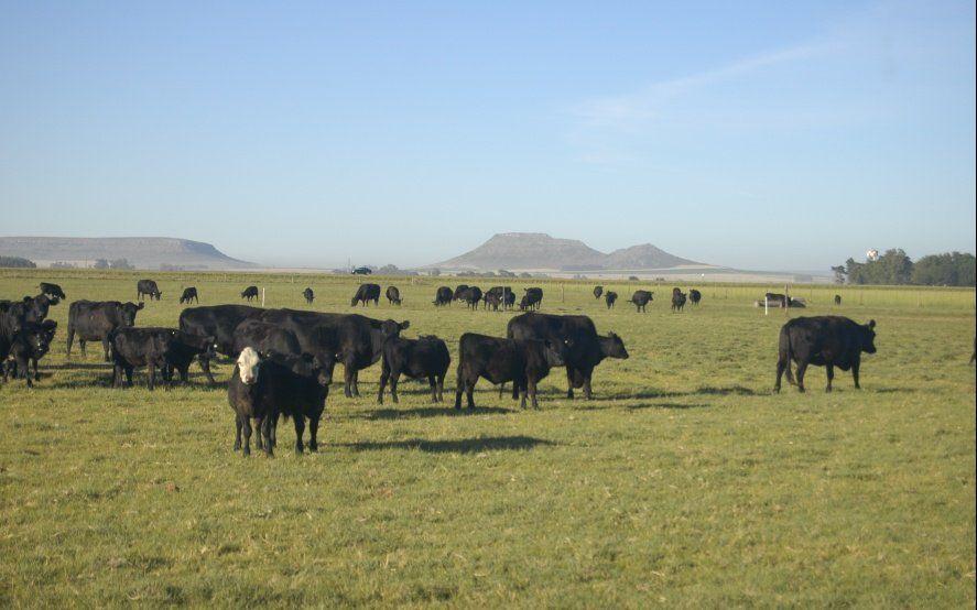 El stock bovino mantiene cierta estabilidad, pero igual cae el rodeo de vacas y vaquillonas