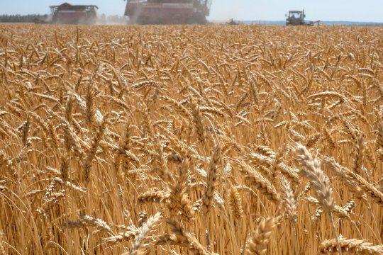 Trigo transgénico: advierten que el pan podría llegar con agroquímicos