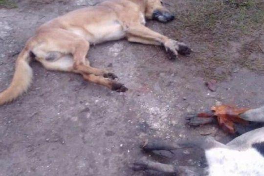 envenenamiento de mascotas: habilitan una linea telefonica para denunciar la matanza de animales