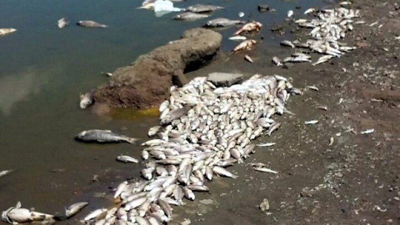 Misterio y polémica: ¿Qué pasó con los peces de la Laguna de Lobos?