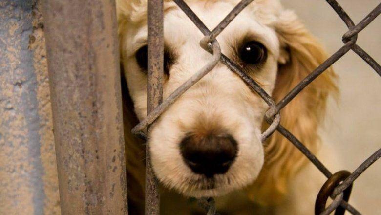 Un veterinario explicó cómo actuar en casos de maltrato animal