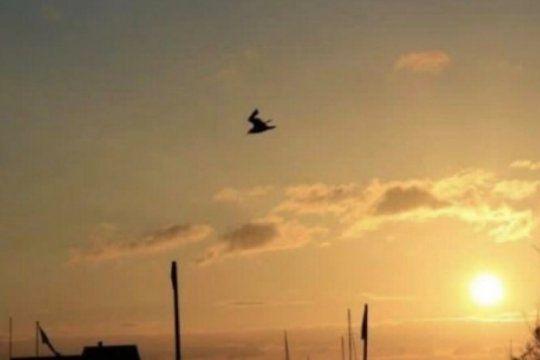 ¿una paloma o un conejo esquiando? la ilusion optica que es furor en las redes