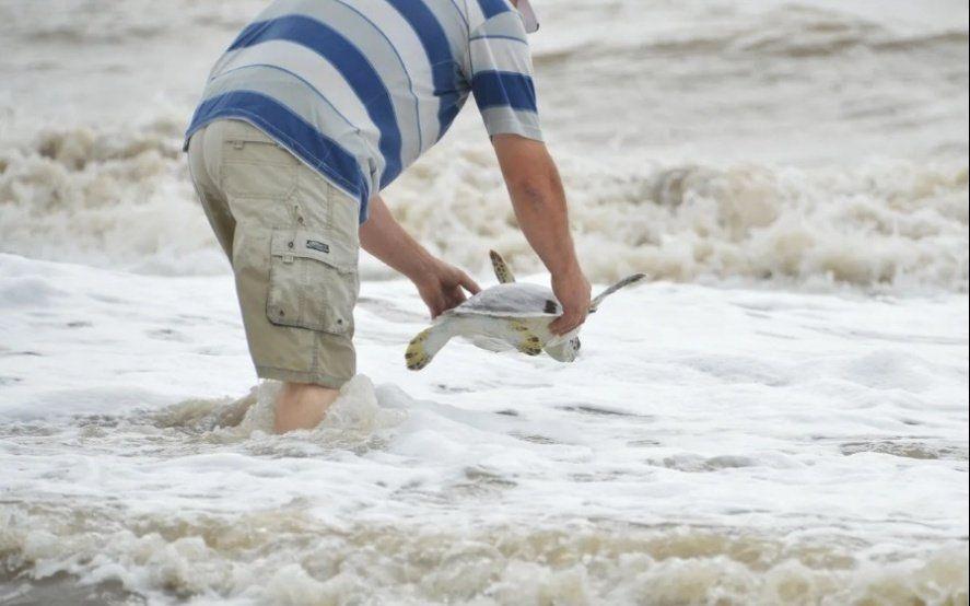 Video: así volvía al mar una tortuga después de expulsar más de un metro de plástico