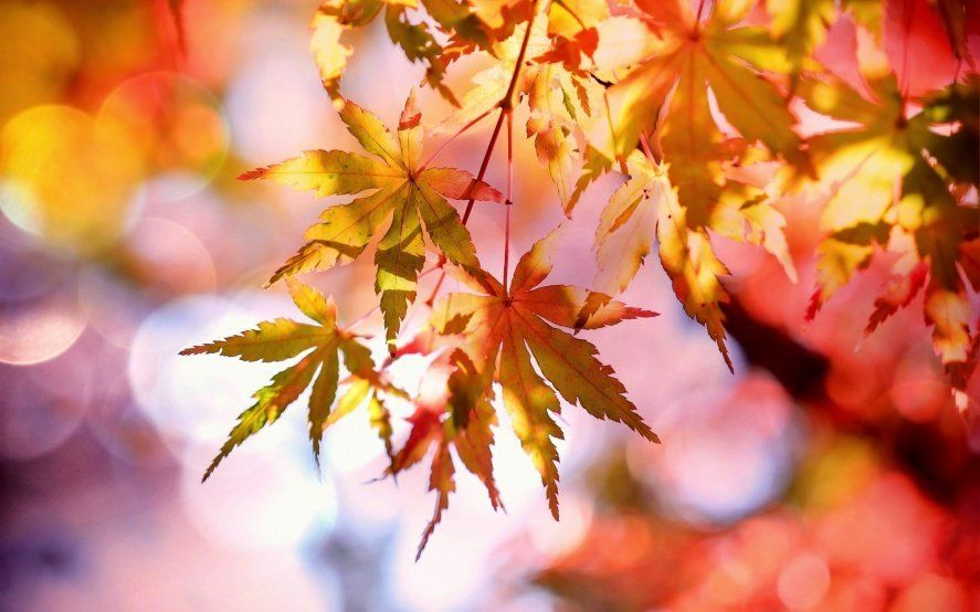 Llega el otoño: qué es el equinoccio y por qué este año la estación cambia el 20 de marzo
