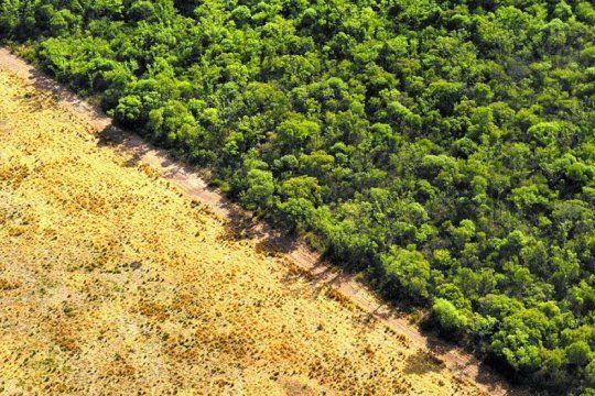 seguilo en vivo: diputados analizan la problematica de la deforestacion