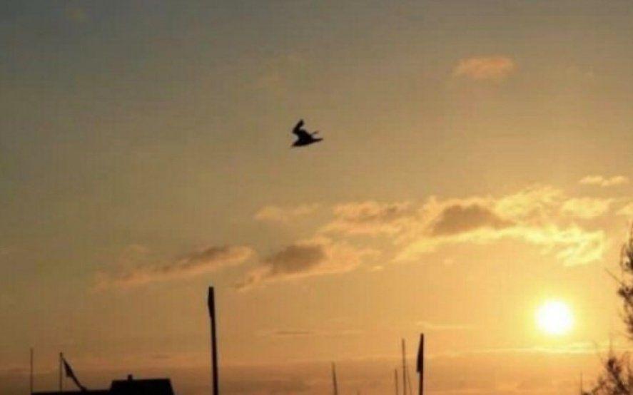 ¿Una paloma o un conejo esquiando? La ilusión óptica que es furor en las redes
