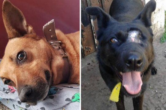 anos de espera: la historia de sol y osa, dos perras rescatadas del abandono que suenan con una familia