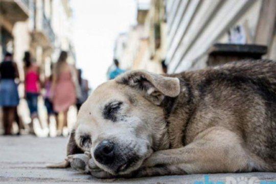 el dia internacional de los animales callejeros, una oportunidad para reivindicar la adopcion