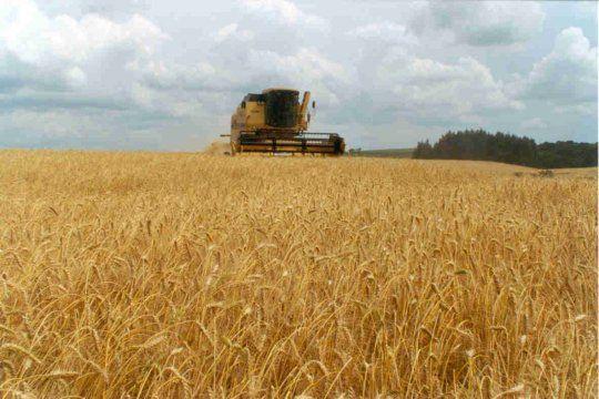 Productores podrán realizar análisis de calidad de trigo de forma gratuita