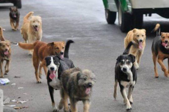 maltrato animal: alarma por 20 perros envenenados y el potencial riesgo para los vecinos