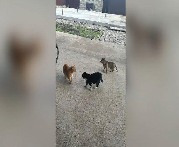 Video viral: ¡Mirá la increible reacción de un perro que no quiere ver pelear a dos gatos!