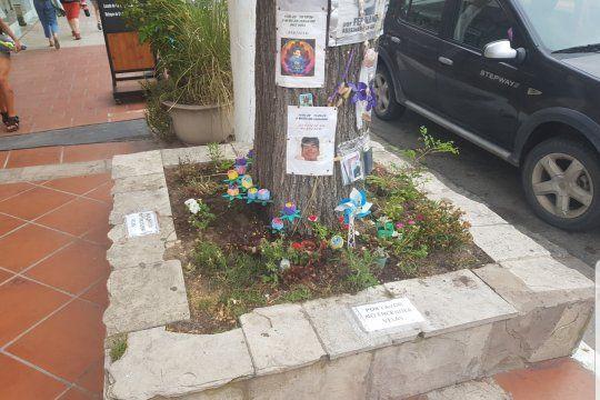 El árbol y el cantero en donde fue ultimado Fernando Báez Sosa es hoy lugar de peregrinación por parte de vecinos y turistas en Villa Gesell