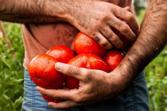 gastronomia, feria e intercambio de semillas en una nueva edicion de la fiesta del tomate platense