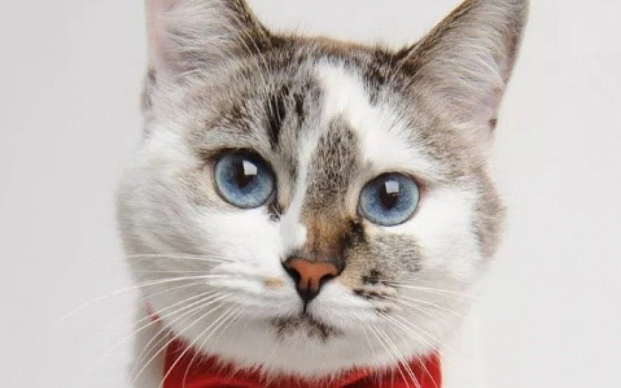 En el día internacional del gato, las redes se plagaron de mensajes