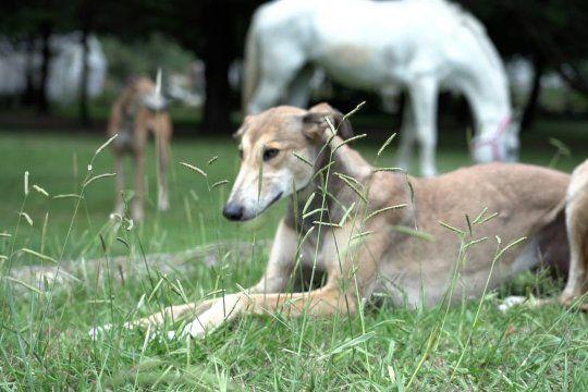 Ya son más de 400 los perros y otros animales asistidos en La Plata.