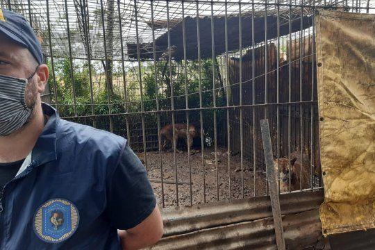 Allanan un campo y descubren un zoológico con 300 animales
