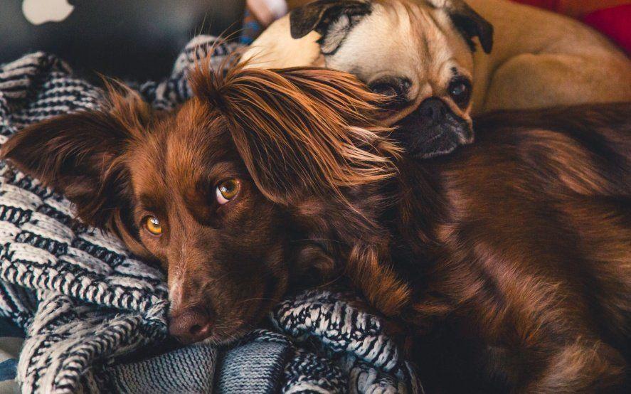 Coronavirus y animales: qué hacer con las mascotas del hogar en medio de la pandemia