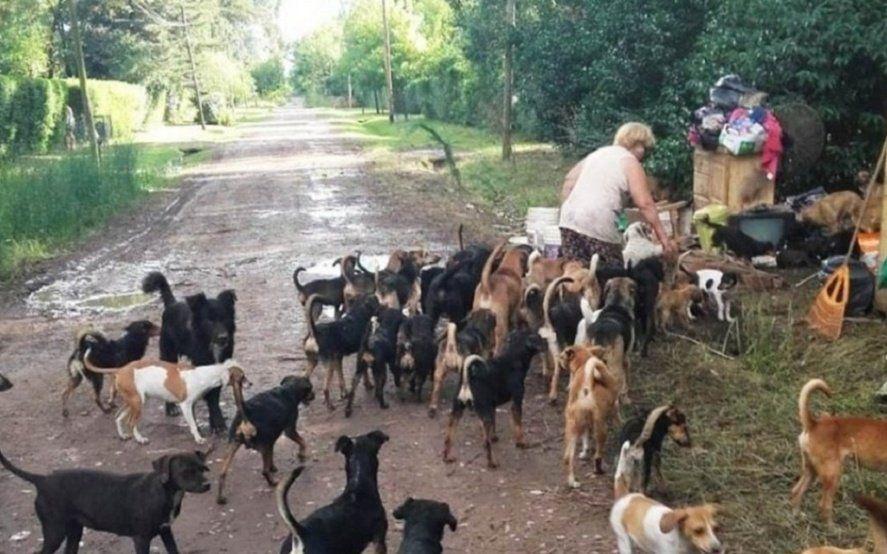 Luego del mal momento que pasó Robertito Funes, rescataron a los 120 perros de Berazategui