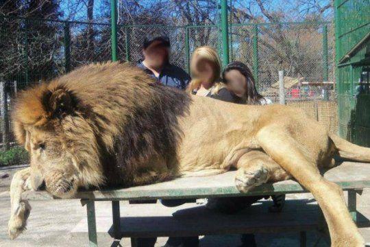 la defensoria exige que se inhabilite el zoo de lujan por ?provocar el sufrimiento? de los animales