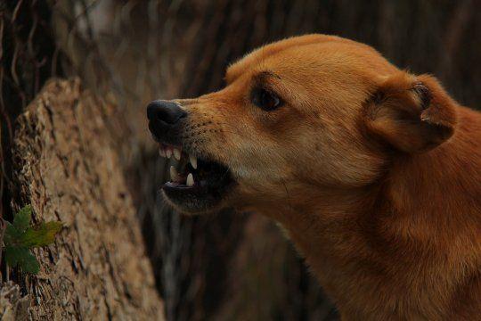 La rabia se transmite principalmente por perros y gatos en Argentina