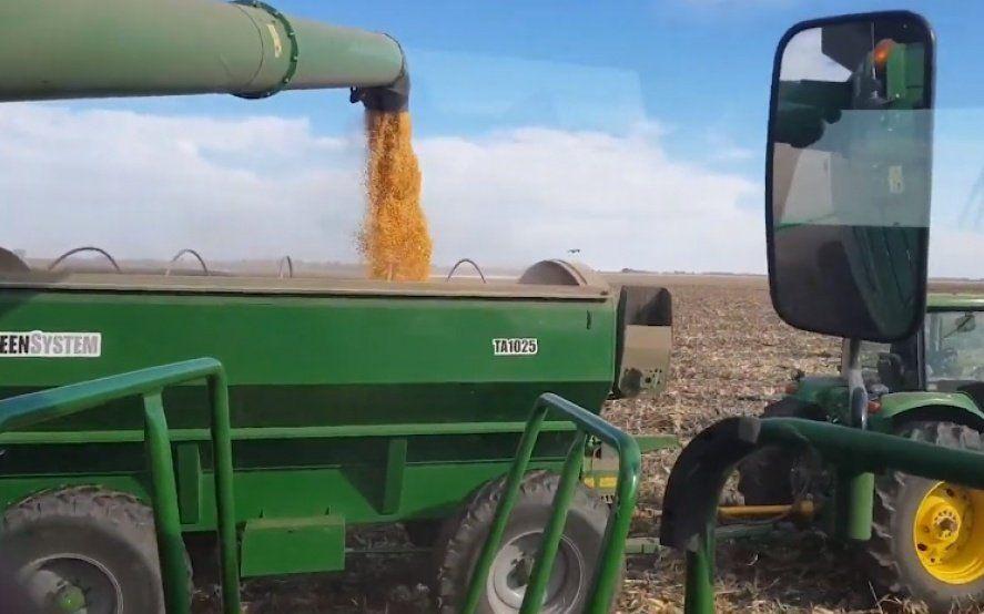 Con 56 millones de toneladas, el maíz empieza a cerrar un récord histórico de producción