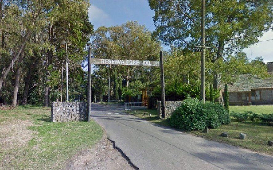 Preocupa la tala indiscriminada de árboles en el Bosque Peralta Ramos