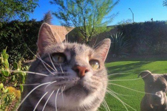 manny, el increible gato influencer que se saca selfies y la rompe en las redes